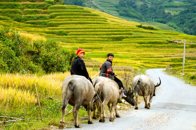 Sapa View, Cozy Vietnam Travel, Vietnam Tours
