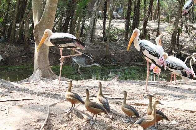 Bac Lieu Bird Sanctuary, Ca Mau, Vietnam Cozy Travel