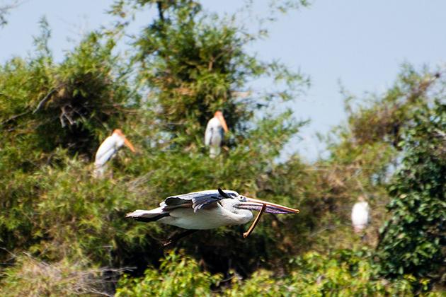 Cuc Phuong Bird Watching, Cozy Vietnam Travel