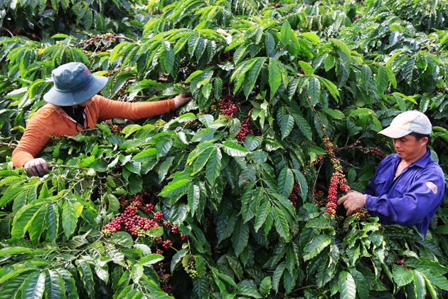 Trung Nguyen Coffee Village, Buon Ma Thuat, Tours, Cozy Vietnam Travel