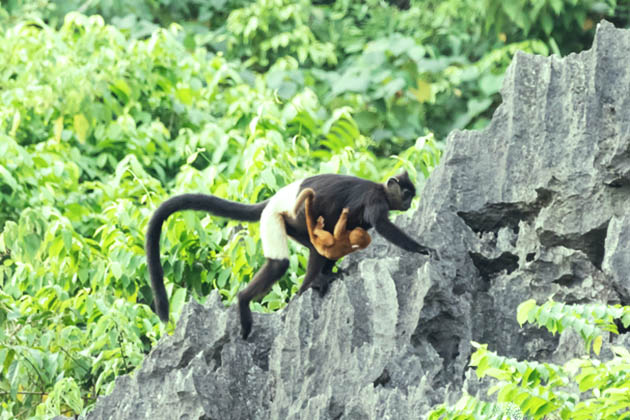 Cuc phuong national park, Ninh Binh Tour, Vietnam Cozy Tour