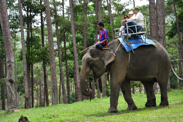 Elephant Ride in Da Dat Lam Dong, Travel, Lam Dong, Cozy Vietnam Travel