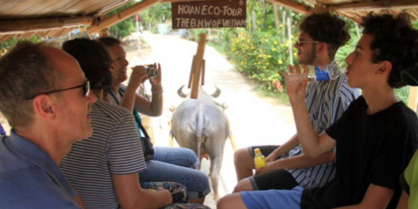 Enjoy buffalo cart ride in Hoi An, Hoi an Travel, Cozy Vietnam Travel, Vietnam Tours