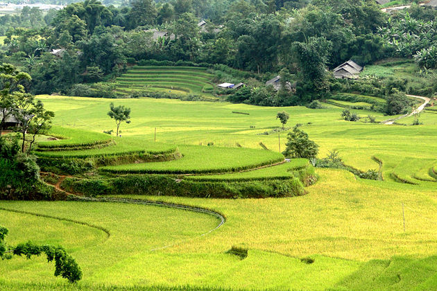 The Rice Field, Lai Chau Tours, Cozy Vietnam Travel