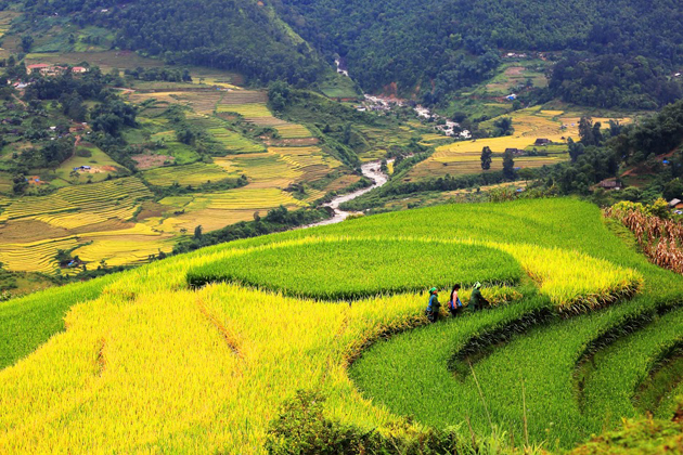 Rice Terraced in Lao Chai Village, Sapa Tours, Sapa, Cozy Vietnam Travel