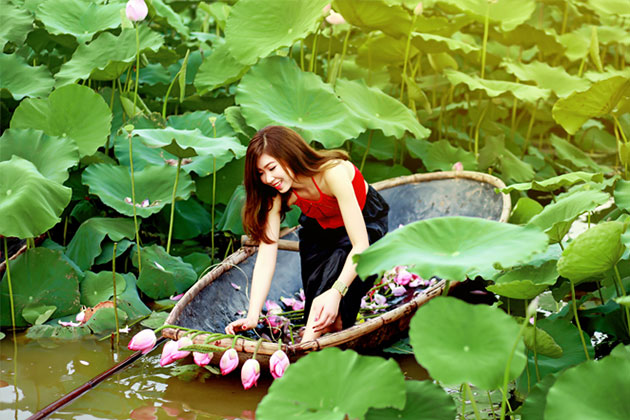 Lotus Flower in West Lake, Hanoi Tour, Cozy Vietnam