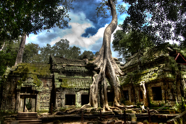 Old banyan tree roots on the roof of Ta Prohm Temple, Cozy Vietnam Travel