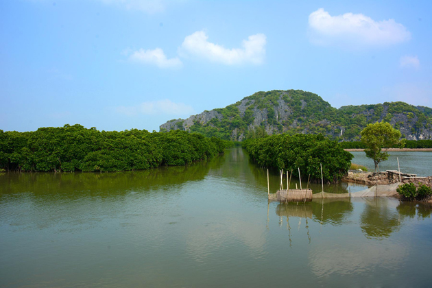 Phu long mangrove forest, Cozy Vietnam Travel