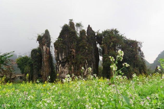 Quan Ba Ha Giang Tours, Cozy Vietnam Travel, Vietnam Tours