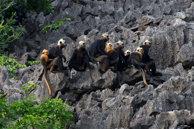 Animals in Cat Ba National Park, Travel, Cat Ba, Cozy Vietnam Travel