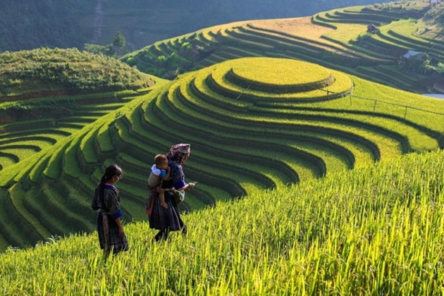 Sapa Tours, Cozy Vietnam Travel, Vietnam Tours
