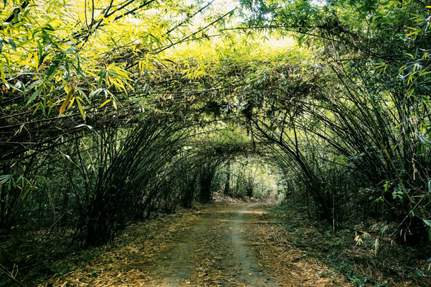 Nam Cat Tien Forest in An Giang, Tours, An Giang, Cozy Vietnam Travel
