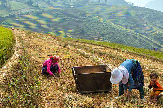 Summer In Yen Bai, Yen Bai, Tour, Cozy Vietnam Tours