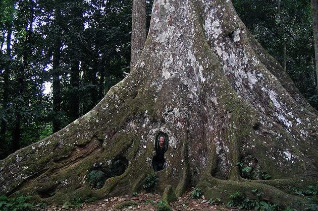 Parashrea Stellata Tree Cave, Ninh Binh, Vietnam Cozy Tour