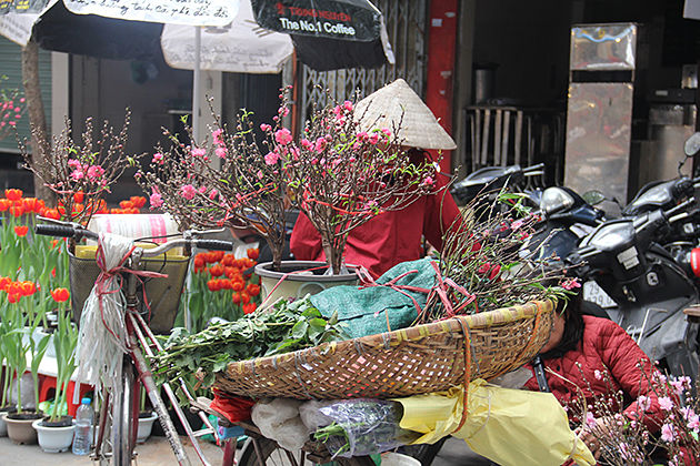 Quang Ba Flower Market, Hanoi, Vietnam, Cozy Vietnam Travel