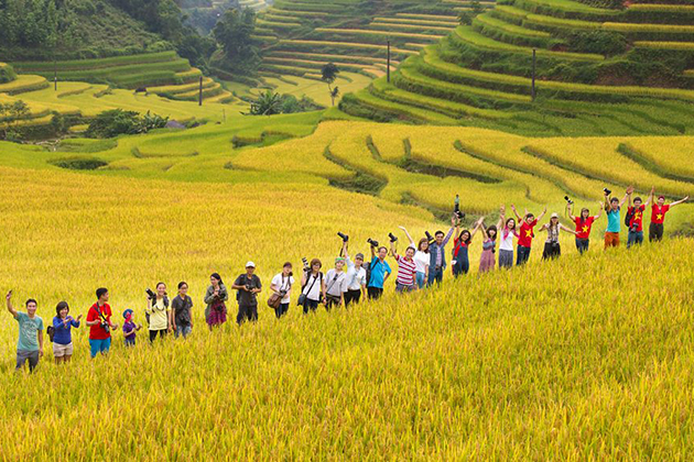 Ripen Rice Season in Ha Giang, Travel, Cozy Vietnam Travel