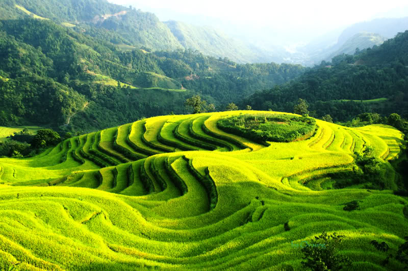 Best Time to Visit Hoang Su Phi, Vietnam Tour, Cozy Vietnam Tours