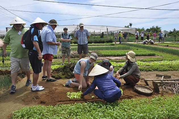 Hoi An Farming Tours, Hoian Travel, Cozy Vietnam Tours