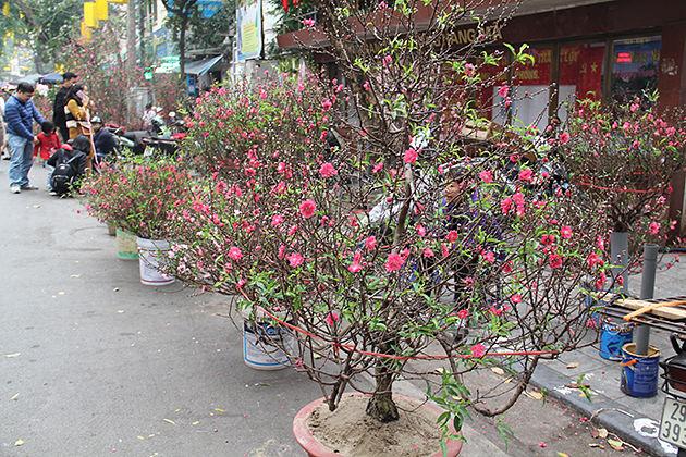 Hang Luoc Flower Market, Hanoi, Vietnam Cozy Travel