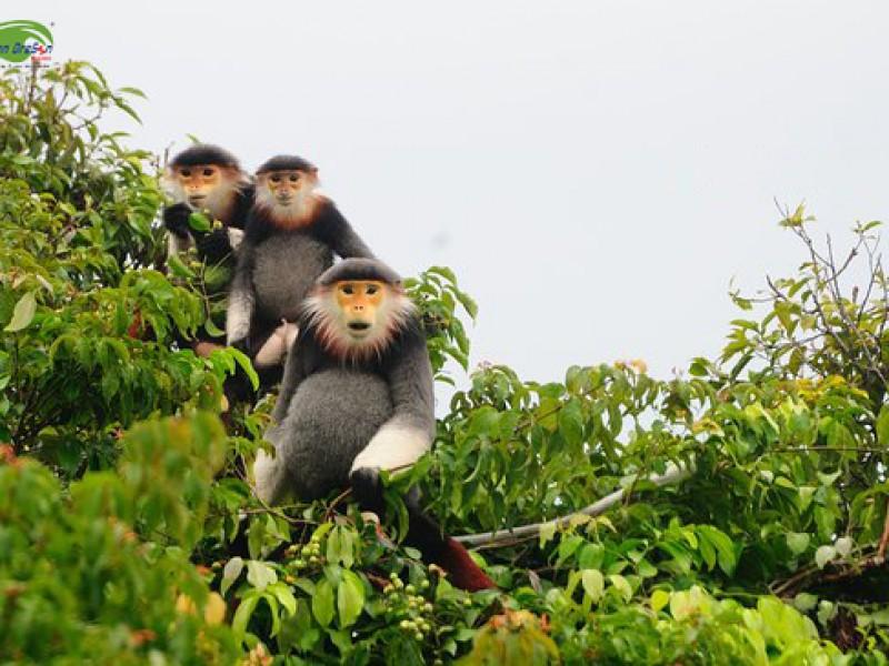 Monkey Mountain Da Nang, Da Nang Tours, Cozy Vietnam Travel, Vietnam Package Tours