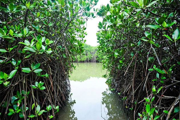 Phu Long Mangroves Forest in Hai Phong, Tour, Hai Phong, Cozy Vietnam Travel