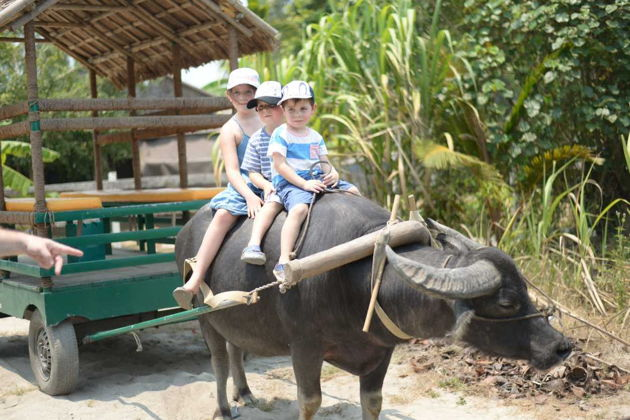 Riding Buffalo Tours in Hoi an, Hoi an Travel, Vietnam Cozy Travel