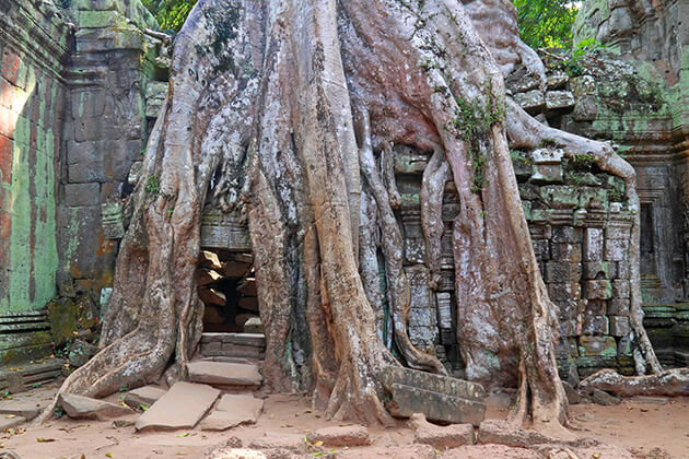 Ta Prohm Temple in Angkor Thom, Cozy Vietnam Travel