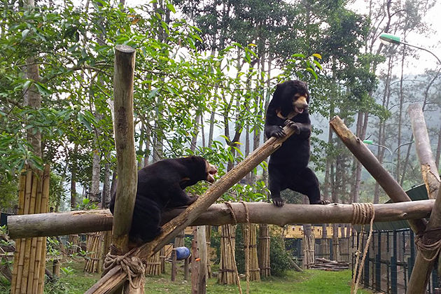 Tam Dao Bear Sanctuary, Vinh Phuc Tours, Vietnam Cozy Tour
