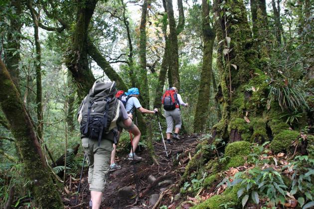 Trekking Adventure in Vietnam, Travel, Vietnam, Cozy Vietnam Travel