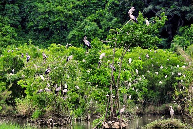 Cuc Phuong National Park Bird Watching