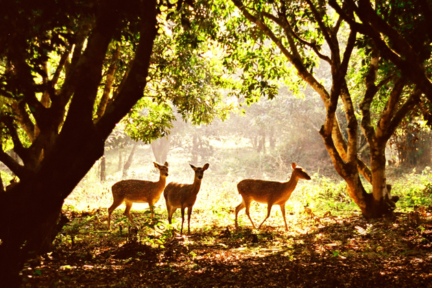 Animals in Cuc Phuong National Park 3, Cozy Vietnam Travel